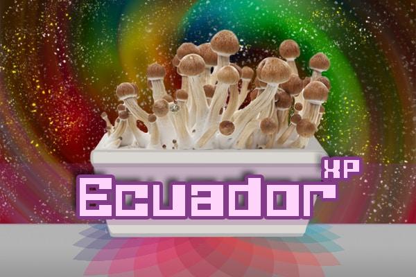 Ecuador Paddo Growkit