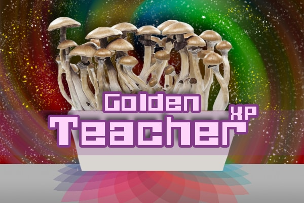 Golden Teacher Paddo Growkit mockup