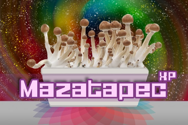 Mazatapec Paddo Growkit