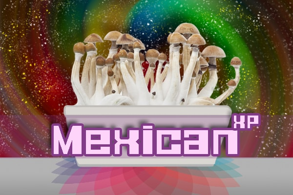 Mexican Paddo Growkit