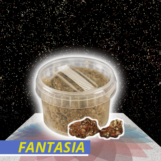 Fantasia Truffel Growkit
