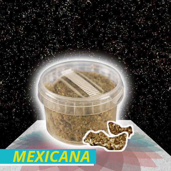 Mexicana Truffel Growkit
