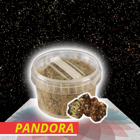 pandora truffel kweekset
